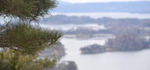 松のアップと大高森からの眺めの背景