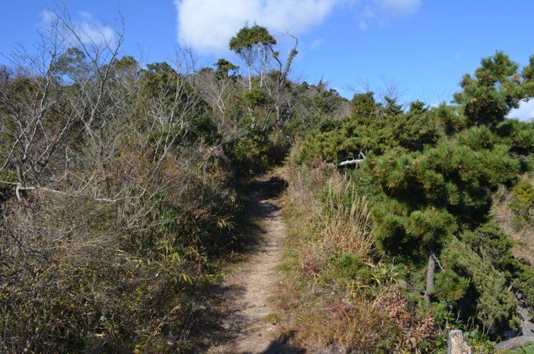 嵯峨見台に向かう林道の坂道