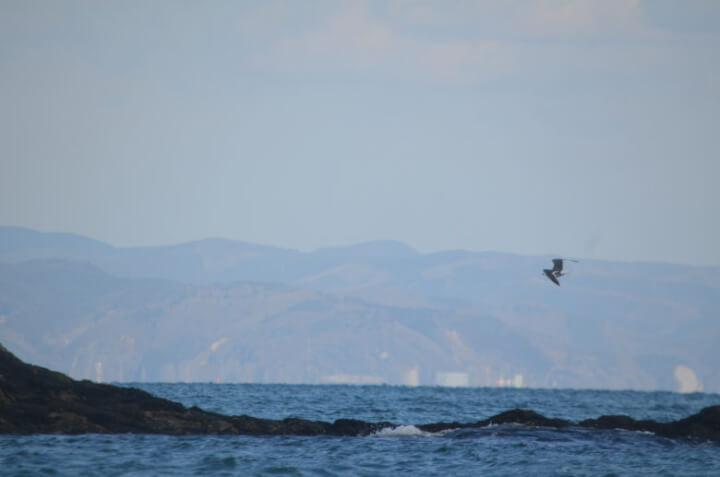 奥松島の海と鳥