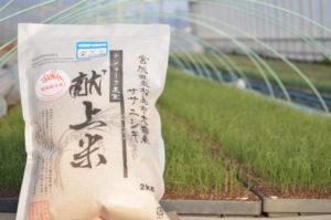 佐藤農園デンマーク王室献上米ササニシキ