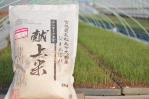 佐藤農園デンマーク王室献上米ひとめぼれ