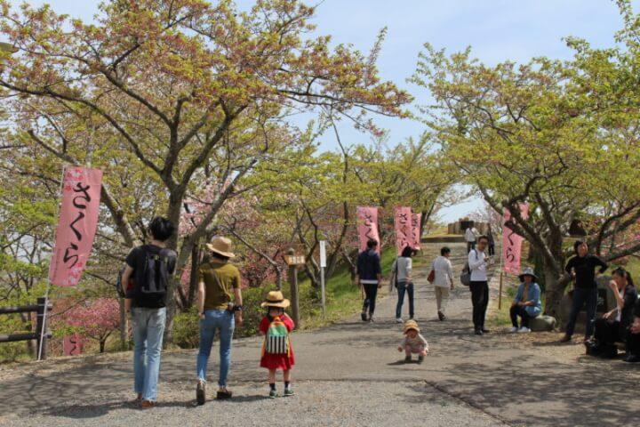 2018滝山桜まつりの様子