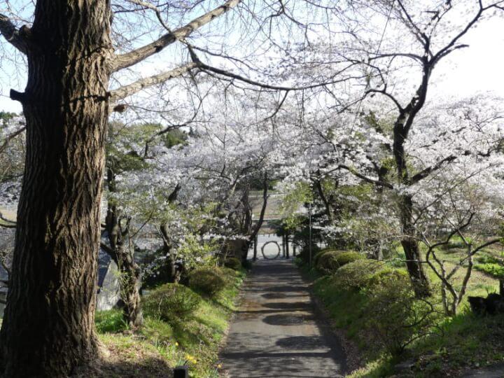 新山神社入口付近の桜